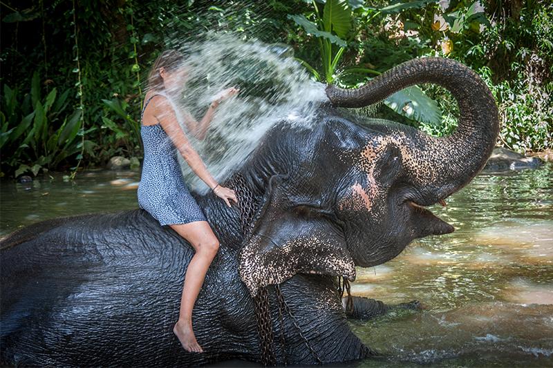 DAY 02 -  NEGOMBO | MILLENNIUM ELEPHANT FOUNDATION | SIGIRIYA (APPROX TRAVEL TIME 4 HRS)