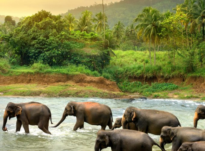 Sri Lanka Holidays | Sri Lanka Travel Agent | Sri Lanka Hotels