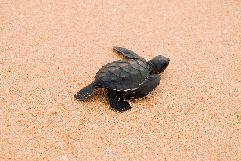 DAY 11 - TURTLES | GALLE
