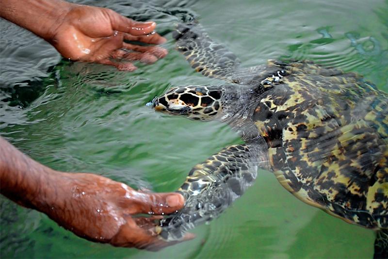DAY 10 - MADU RIVER | TURTLES IN KOSGODA | SEA BATH IN HIKKADUWA | TSUNAMI PHOTO MUSEUM (FULL DAY ACTIVITY)