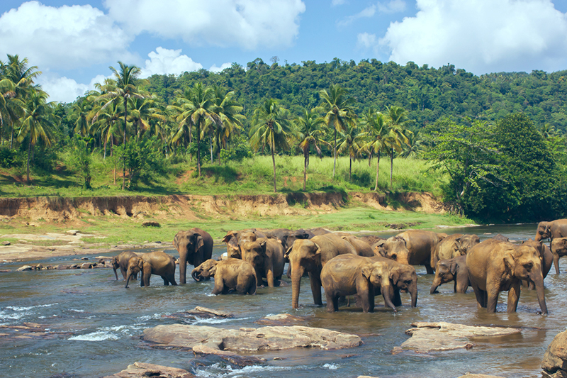 DAY 03 - DAY EXCURSION - PINNAWALA ELEPHANT ORPHNAGE | KANDY